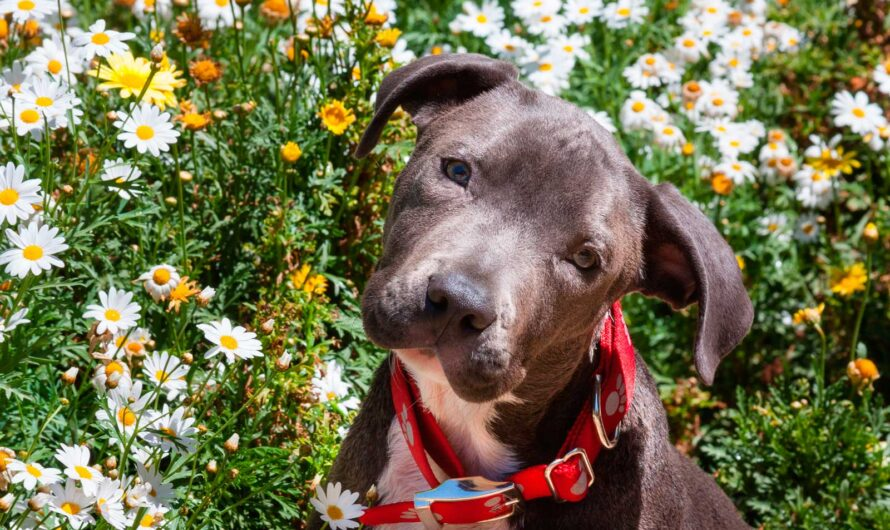 Delta Updates Emotional Support Animal Policy, Bans Pit Bulls